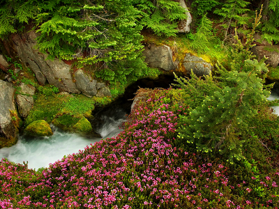river and evergreens