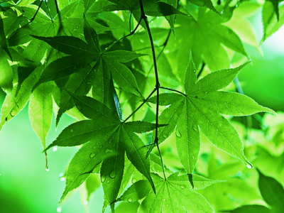 spring wallpaper green wallpaper