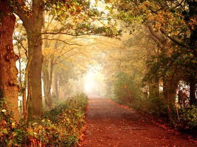 fall leaves, park,