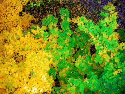 yellow and green leaves