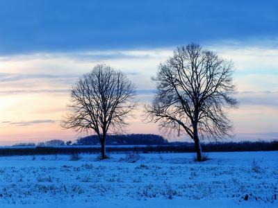 field, snow,horizon