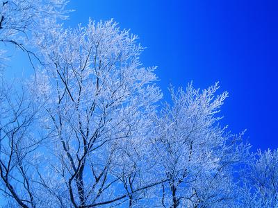 snow, winter, cold, ice