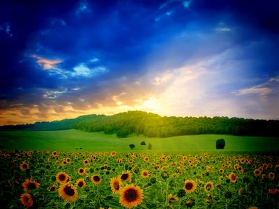 sunrise, nature, landscape