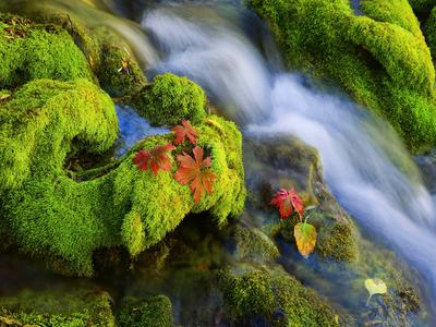 green, nature, stream