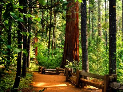 redwoods, park, green, forests, American landscape