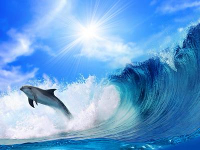summer wallpaper, ocean, sea