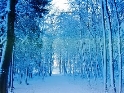 Democratic Forest Snow wallpaper