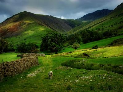 Green Scottish Hills wallpaper