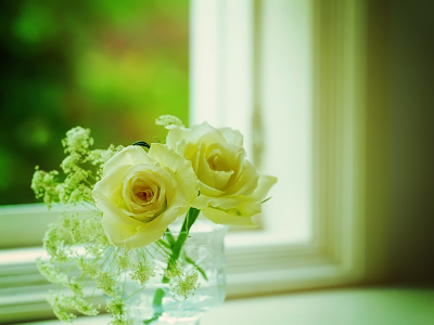 Window Roses wallpaper