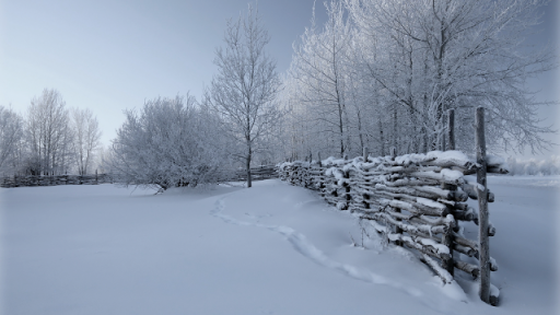 Country Rail Fence Winter wallpaper