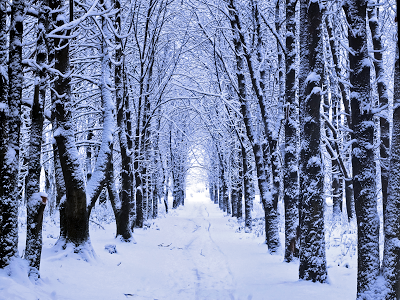 Winter Woods Snow wallpaper
